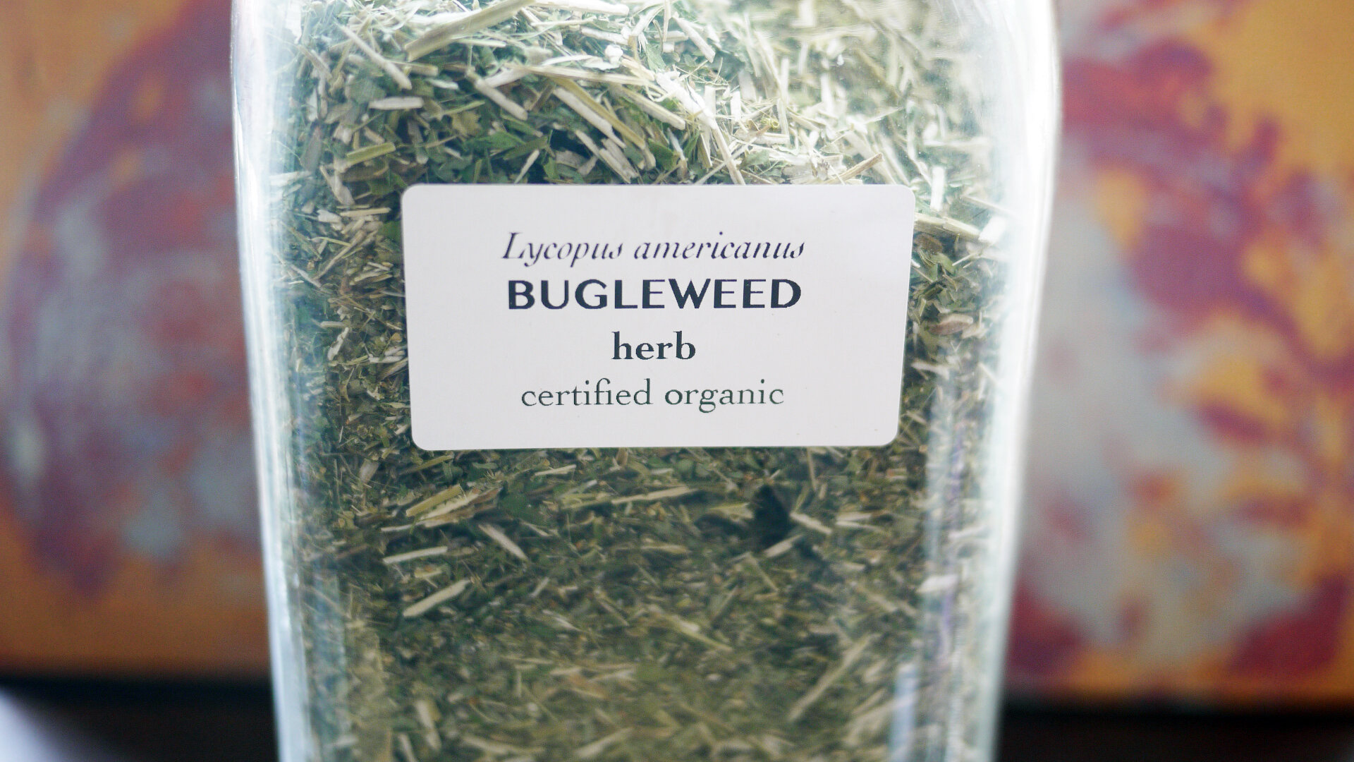 Bugleweedherb.jpg