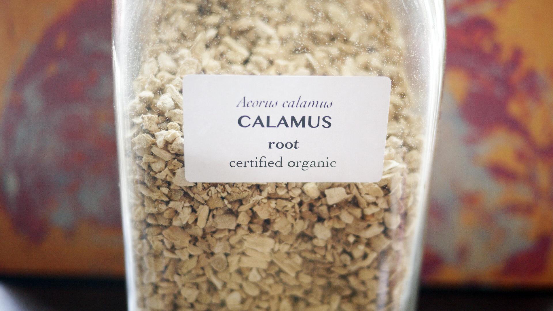 Calamusroot.jpg