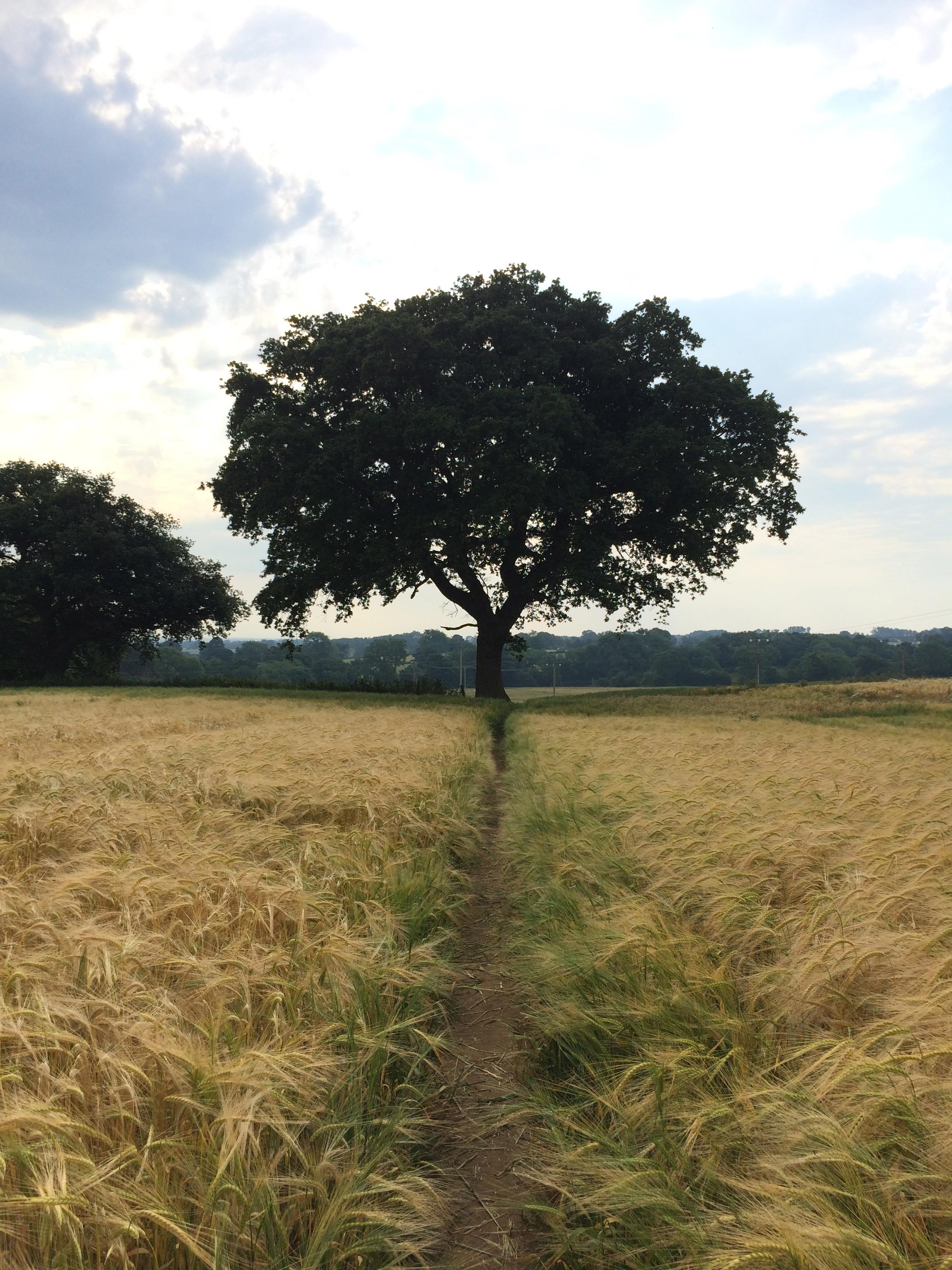 Wheat fields en route