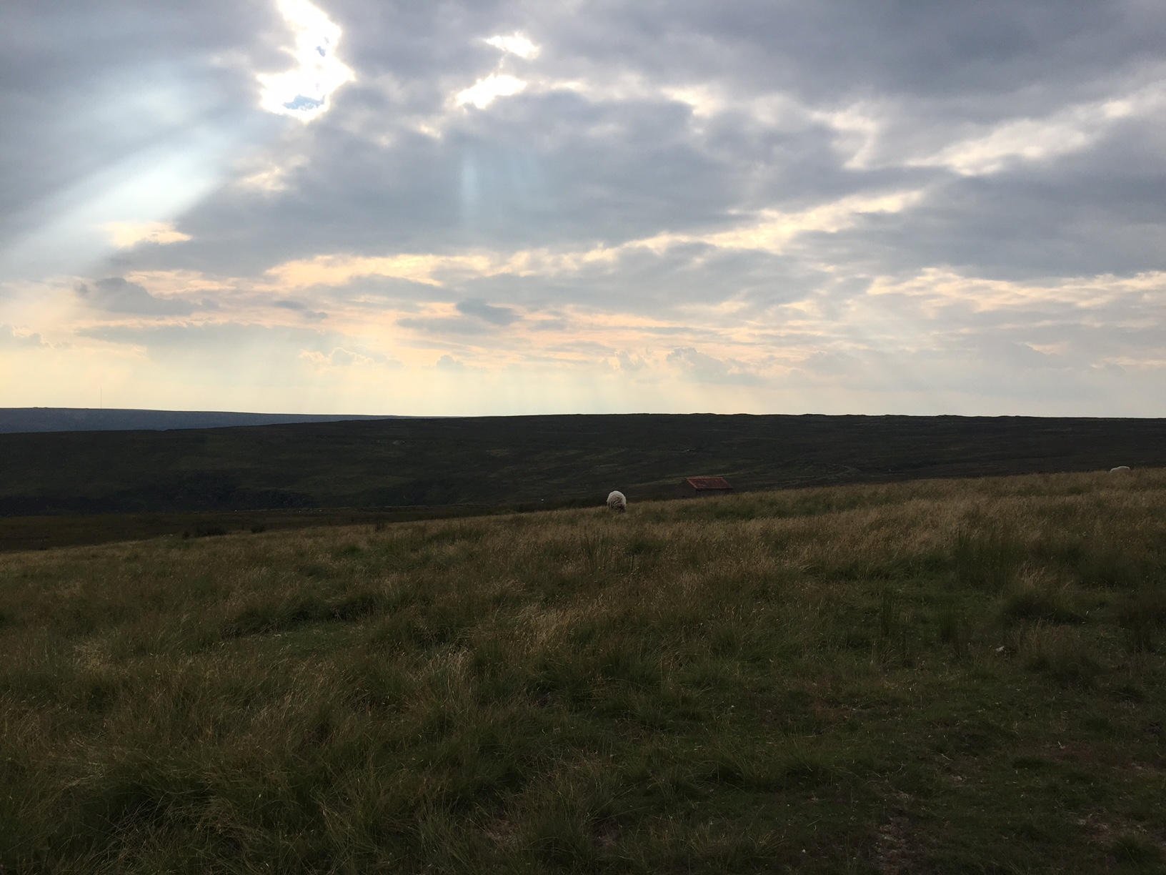 Goodnight from the moors