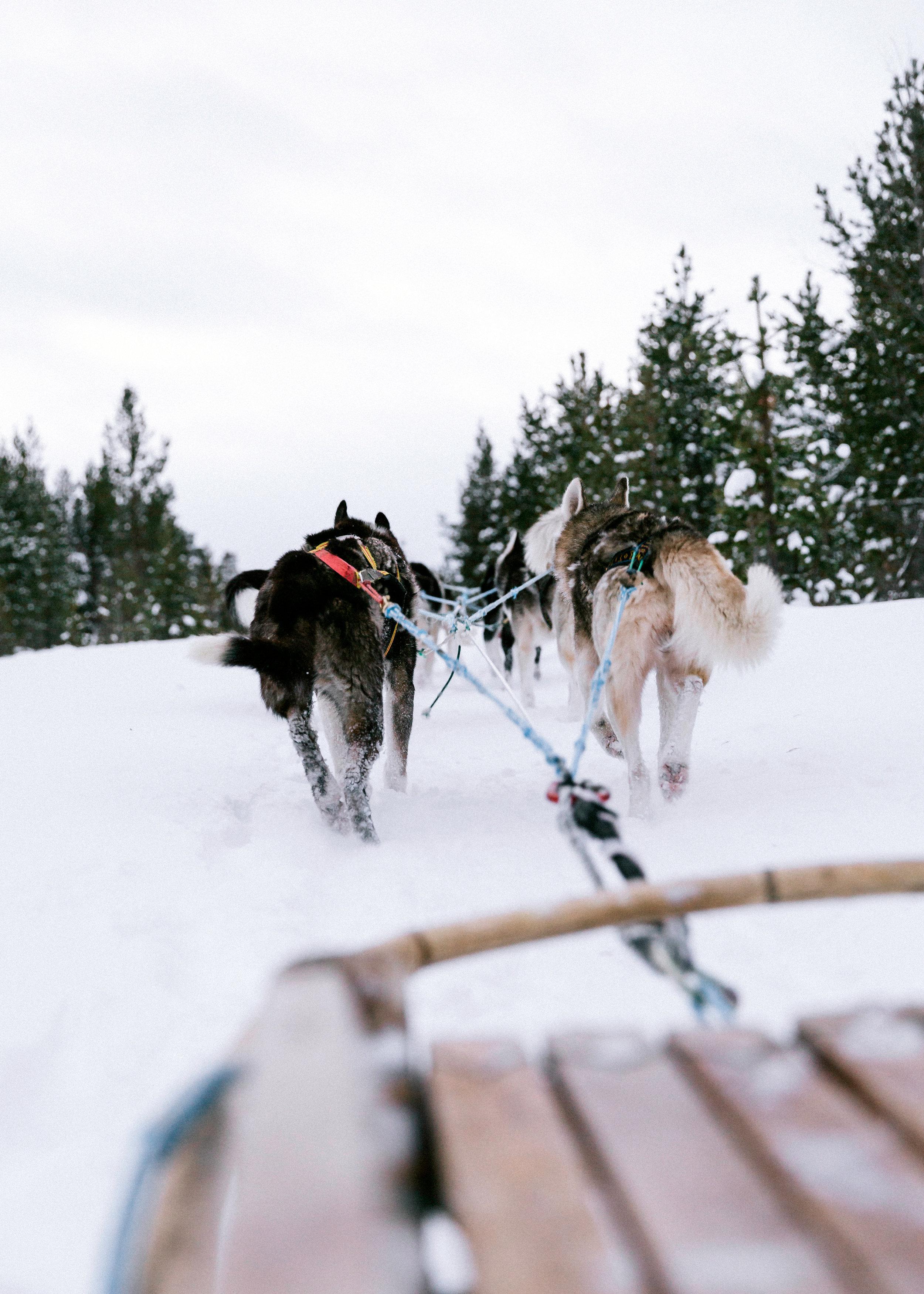 Husky Dog Sled-32.jpg