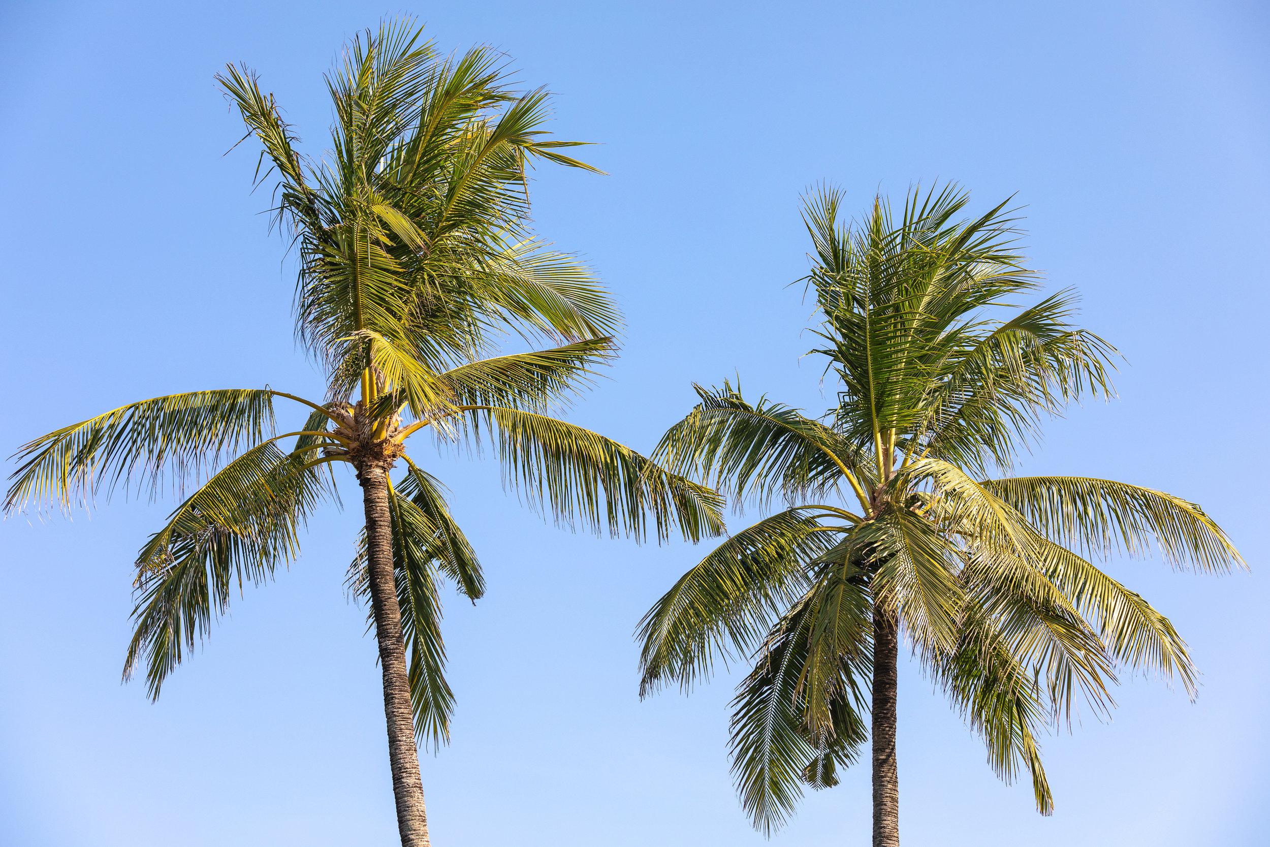 CM Bali_4.jpg