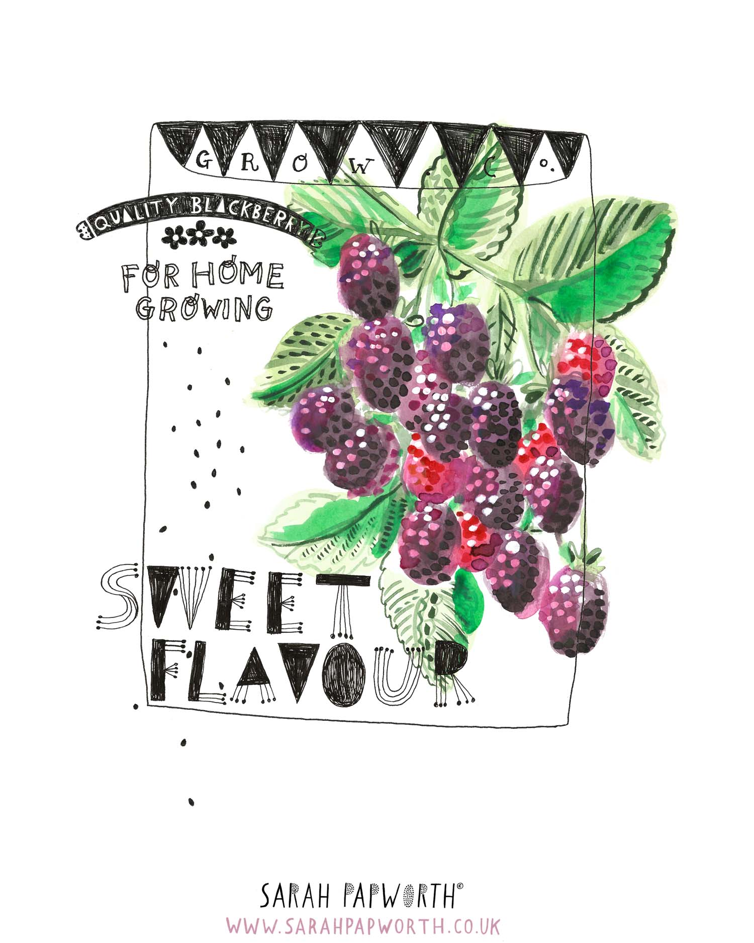 blackberry illustration food watercolour editorial by sarah papworth.jpg