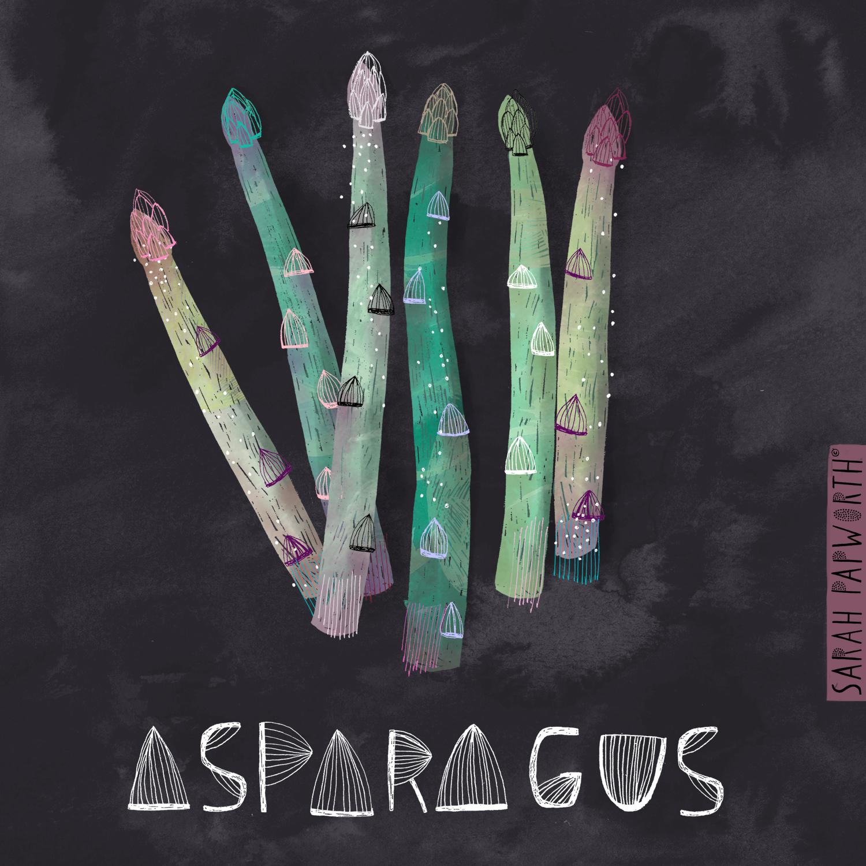asparagus food book editorial work illustration sarah papworth.jpg