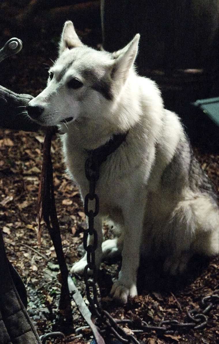 Lady before her execution. She was killed because Nymeria escaped punishment after biting Joffrey to save Arya's life.