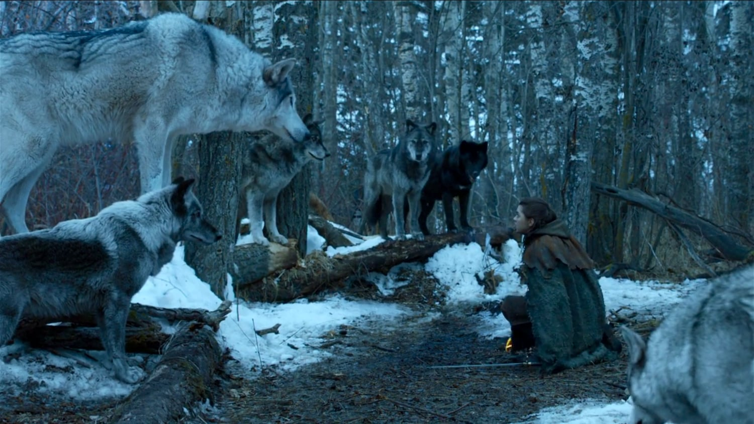 Arya encounters Nymeria five seasons since their seperation on her way back to Winterfell.