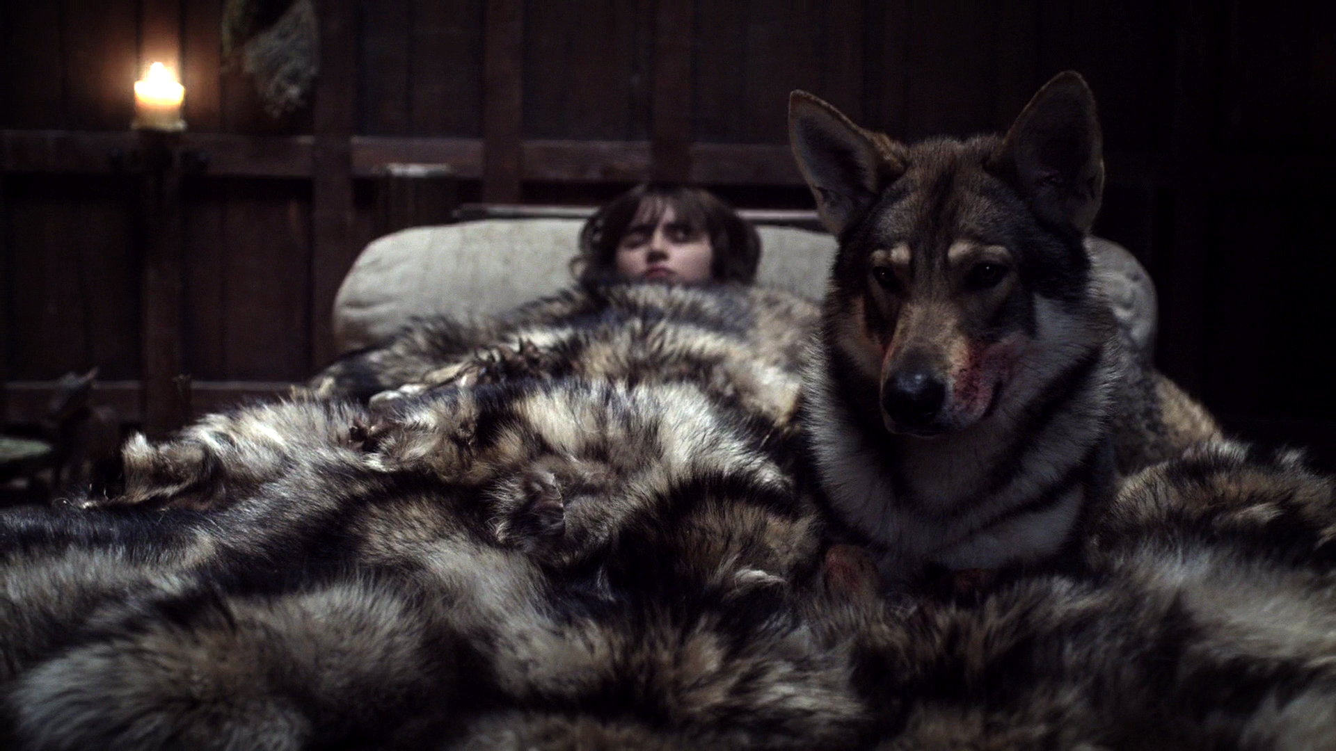 Summer protects Bran from the assassin sent to kill him.