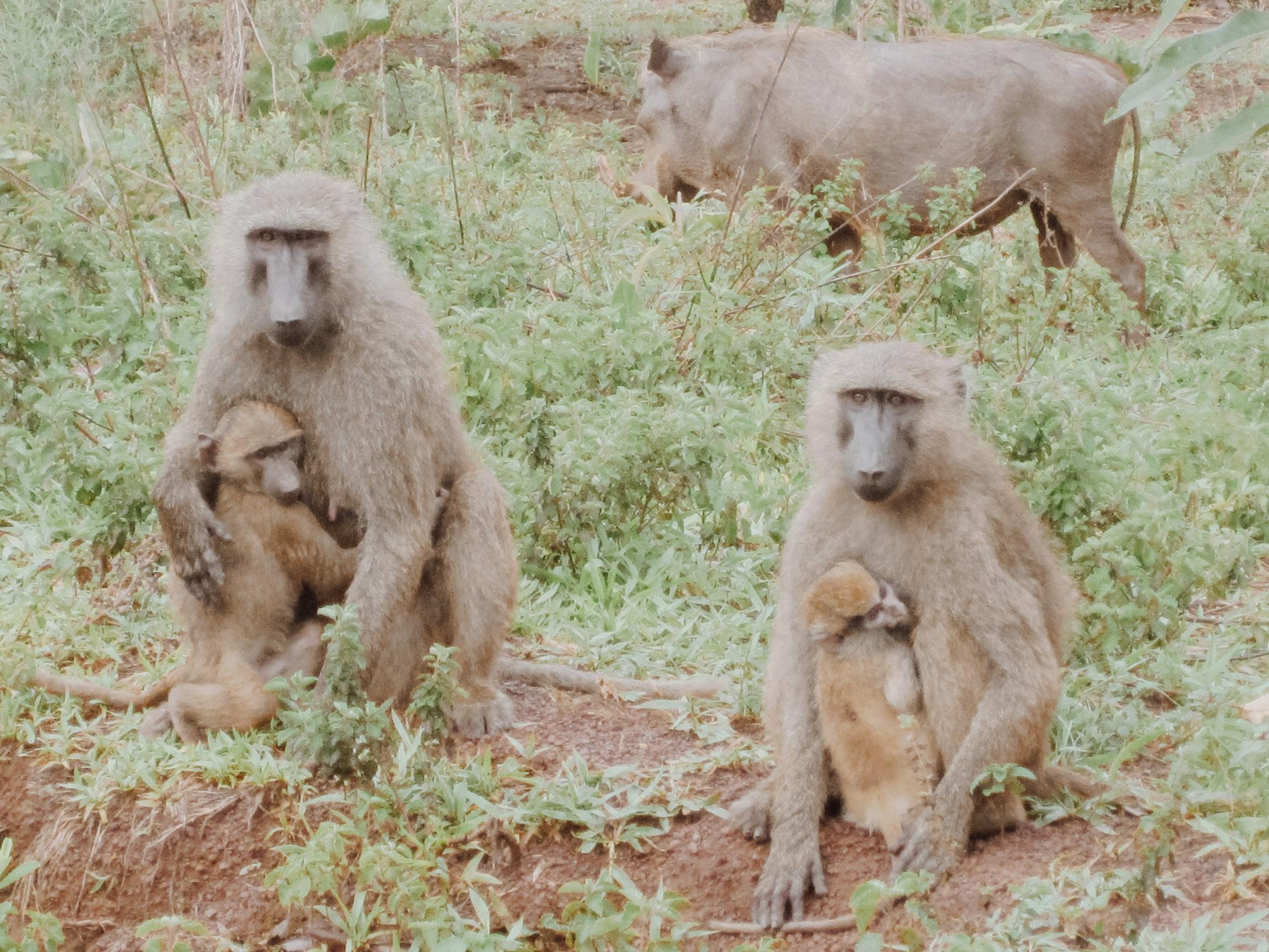 Friends encountered in Mole National Park | Photo by Caroline Taft,  The Brazen Gourmand