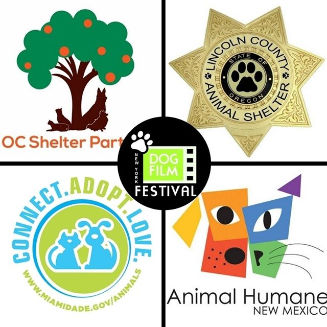 We're in CA, OR, NM and FL this weekend in support of @ocshelterpartners, Lincoln County Animal Shelter, @miamianimalserv and @animalhumanenm. Click the link in our bio and go to DESTINATIONS for more info.  #DogFilmFestival #Adoptdontshop #rescuedogsofinstagram #dogsoforangecounty #rescuedogsoforangecounty #dogsofca #rescuedogsofca #dogsoffl #rescuedogsoffl #dogsofmiami #rescuedogsofmiami #dogsofnewmexico #rescuedogsofnewmexico #dogsofnm #rescuedogsofnm #dogsofalbuquerque #rescuedogsofalbuquerque #dogsororegon #rescuedogsoforegon #dogsofor #rescuedogsofor