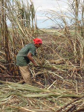 A sugar cane worker in Costa Rica.