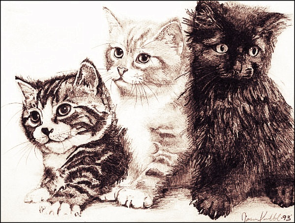 polycats