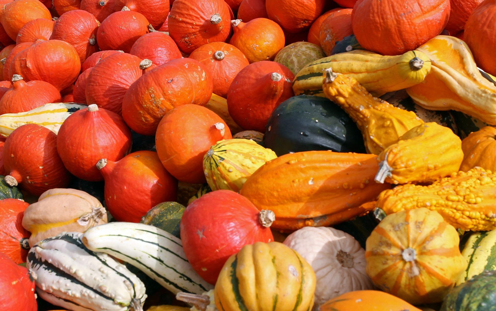 pumpkins-469598_1920.jpg