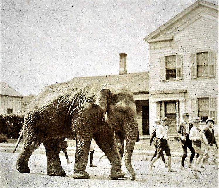 The picture shows village boys walking with the elephant in front of the Henry Alden house formerly at 108 East Liberty Street on the North-side of the Public Square. (Between the I.O.O.F. Hall and the Princess Block)