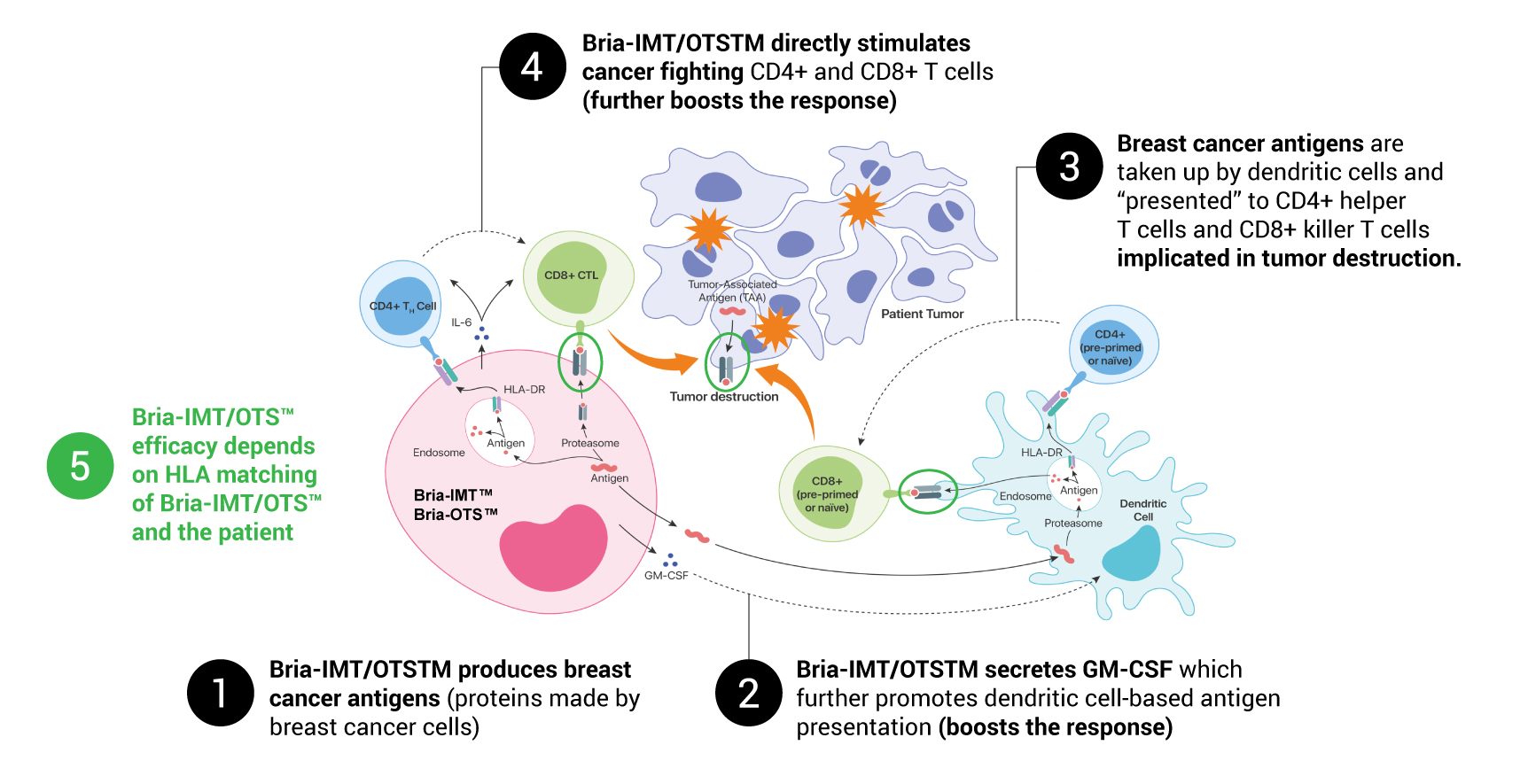 Hypothetical Mechanism of Targeted Immune Activation by Bria-IMT™ & Bria-OTS™ in Advanced Breast Cancer