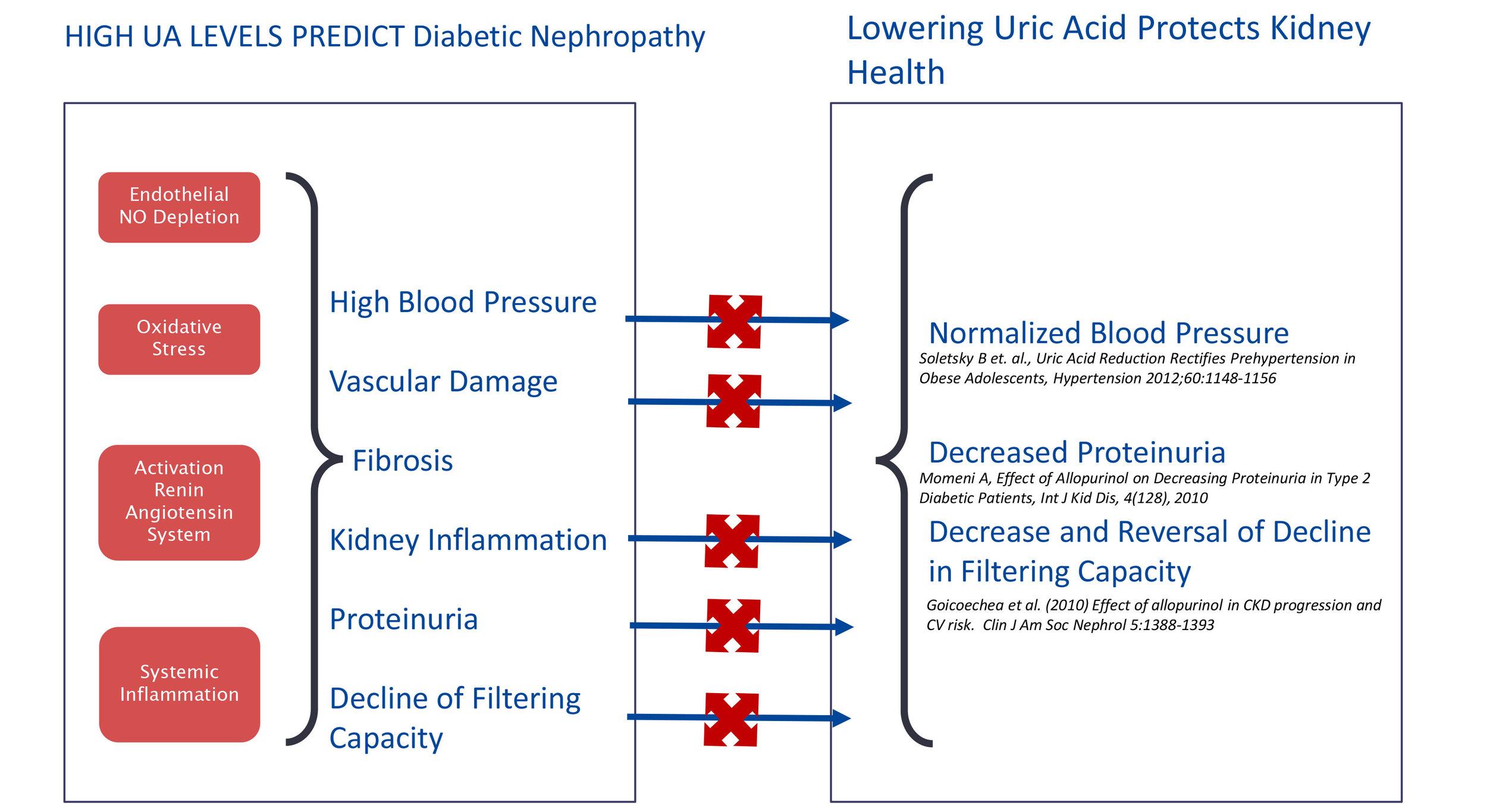 Uric Acid (UA): a Bad Actor in Kidney Disease