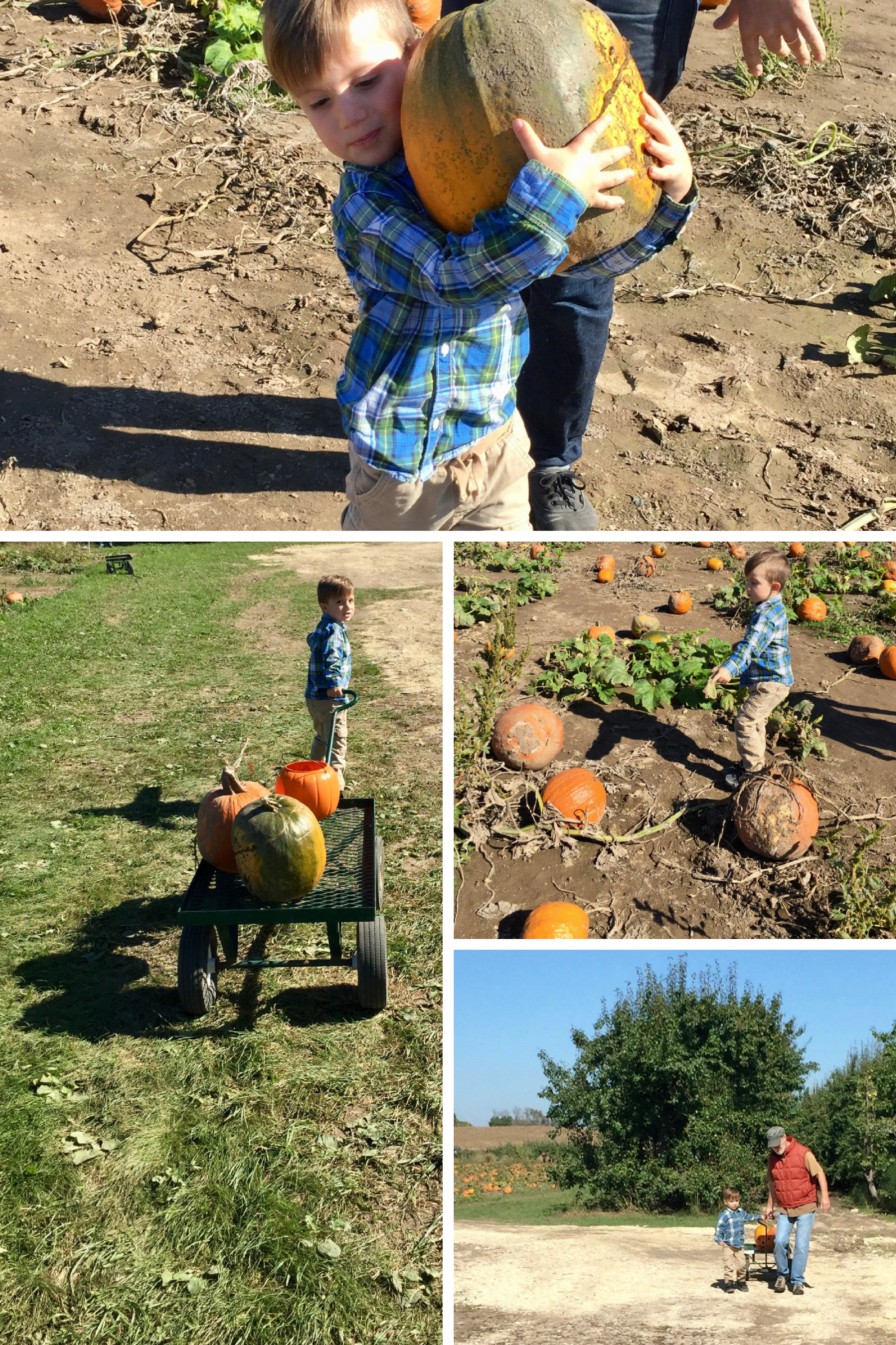 Family-Fun-On-The-Farm-Pumpkin-Picking-The-Daily-Bubbly