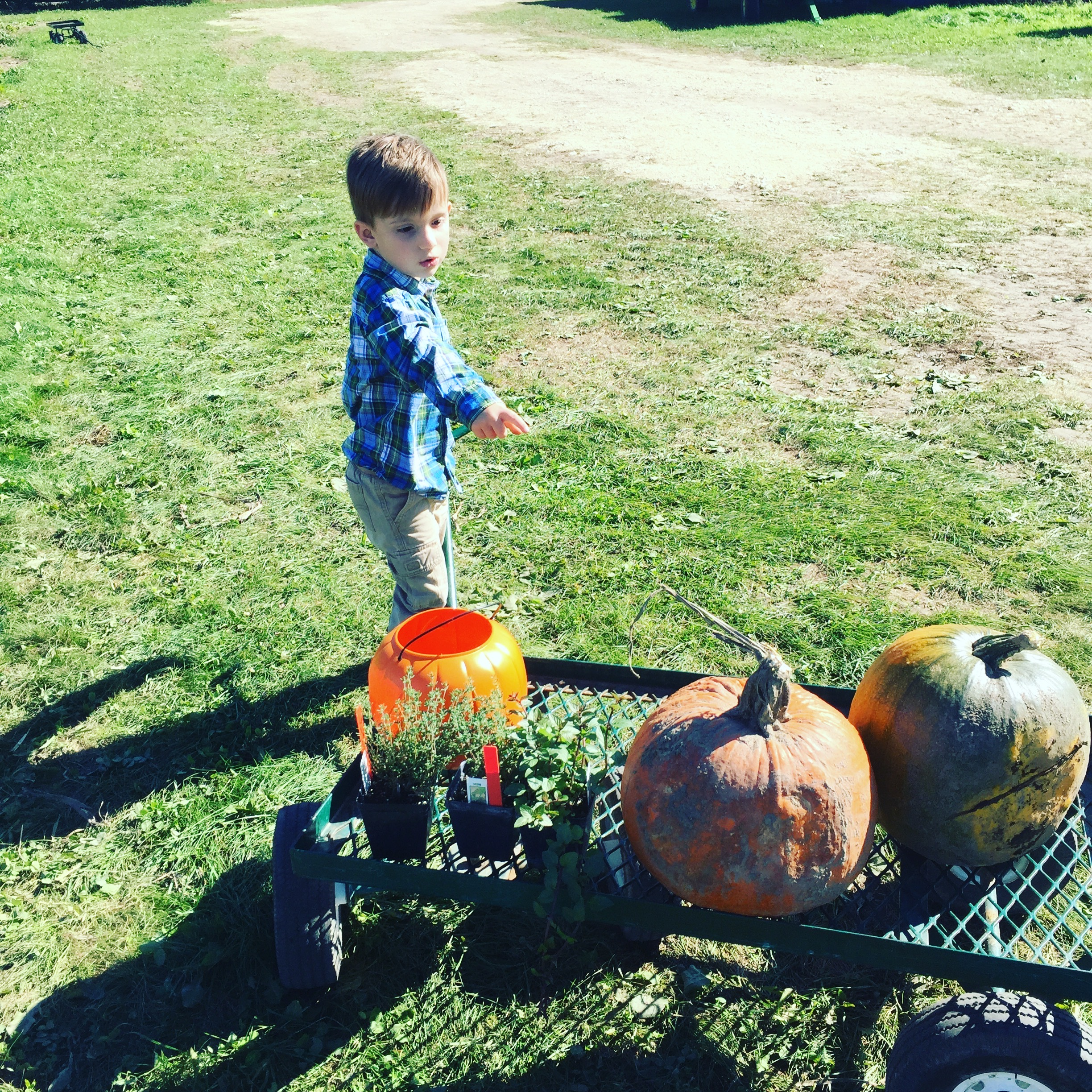 pumpkin-picking-the-daily-bubbly-blog