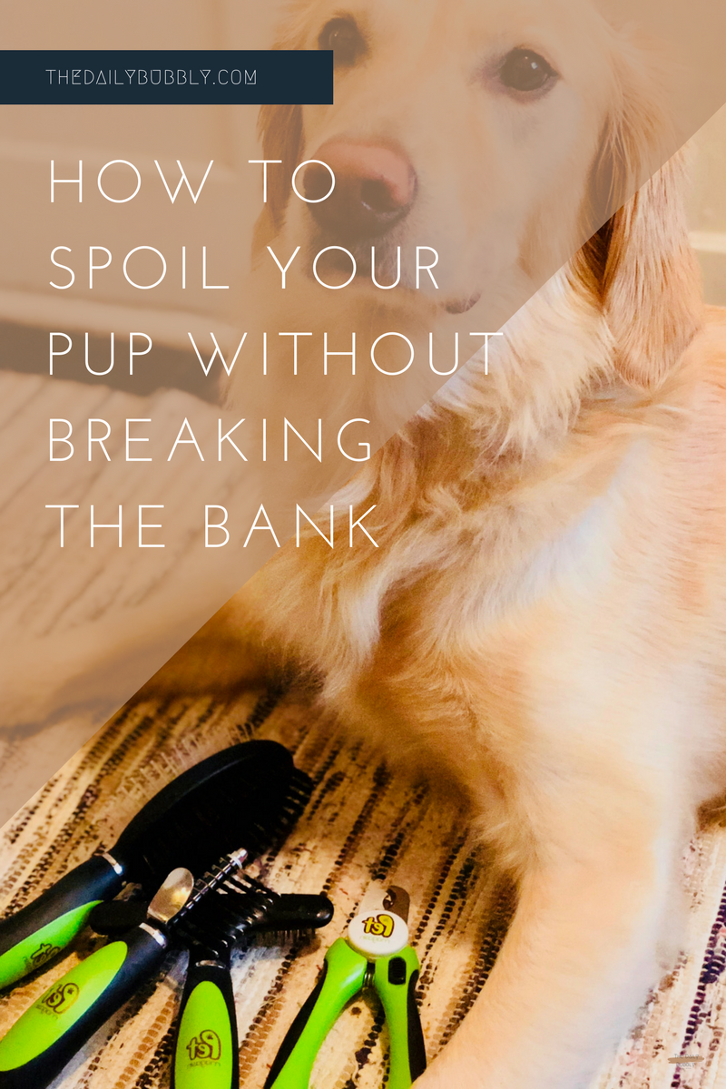 How To Spoil Your Pup Without Breaking The Bank-The Daily Bubbly-1.png