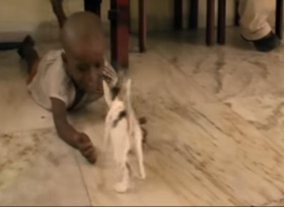 En håpefull Rida som leker med en kattunge, uviten om hva som venter han.