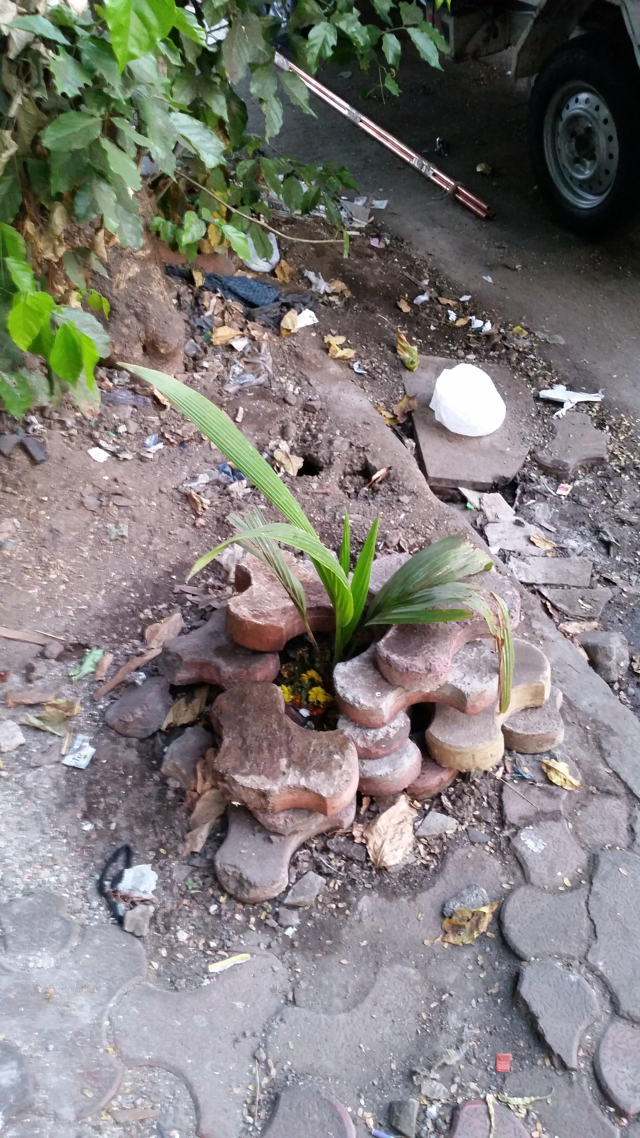 Et symbolsk bilde på en blomst som kjemper for sin rett på asfalten.