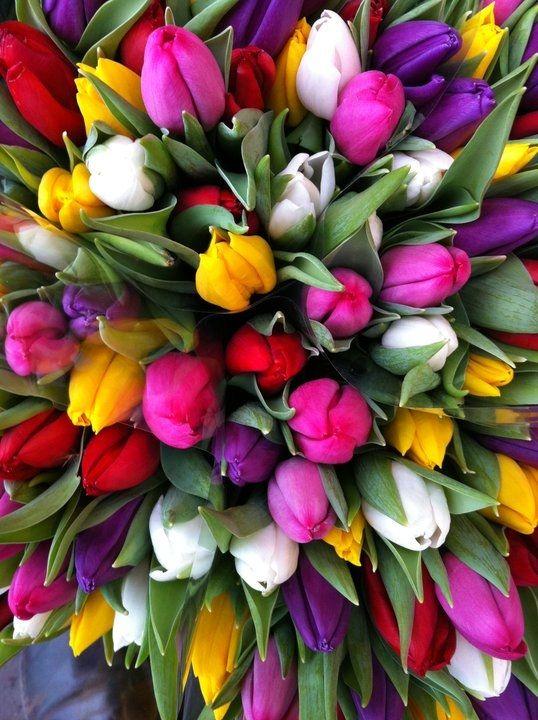 tulipaner 2.jpg