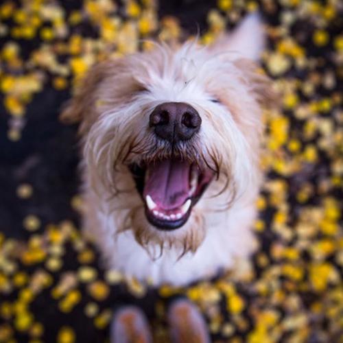 Happy-Leaf-Dogs.jpg