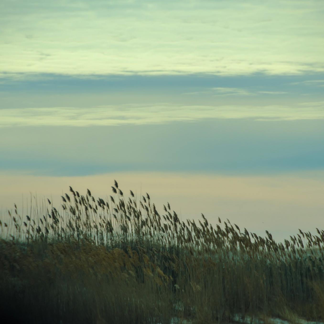 Windy Crutchfield -