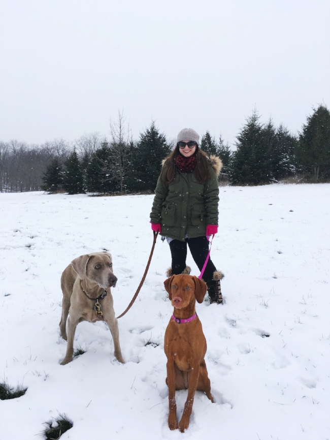 a wintry walk in the woods with our family's sweet pups