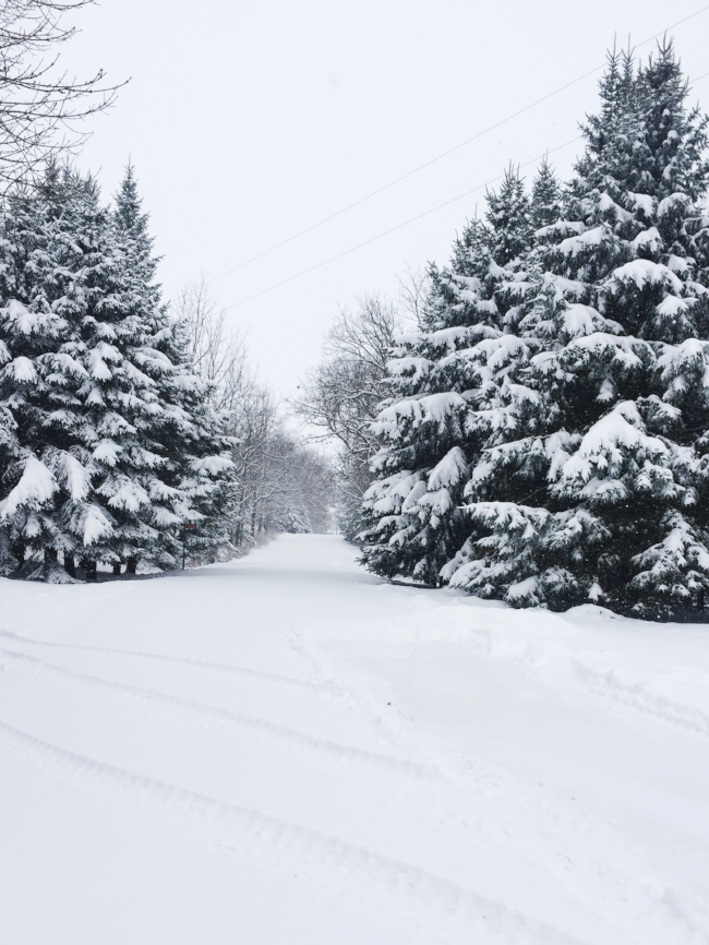 a very snowy (but oh-so-pretty) roadway
