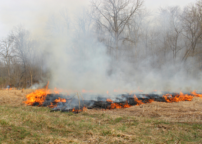Spring Projects at the Far | Controlled Burning | La Petite Farmhouse