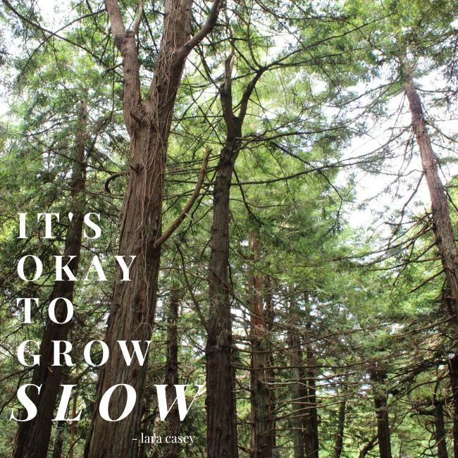 """it's okay to grow slow"" - lara casey"