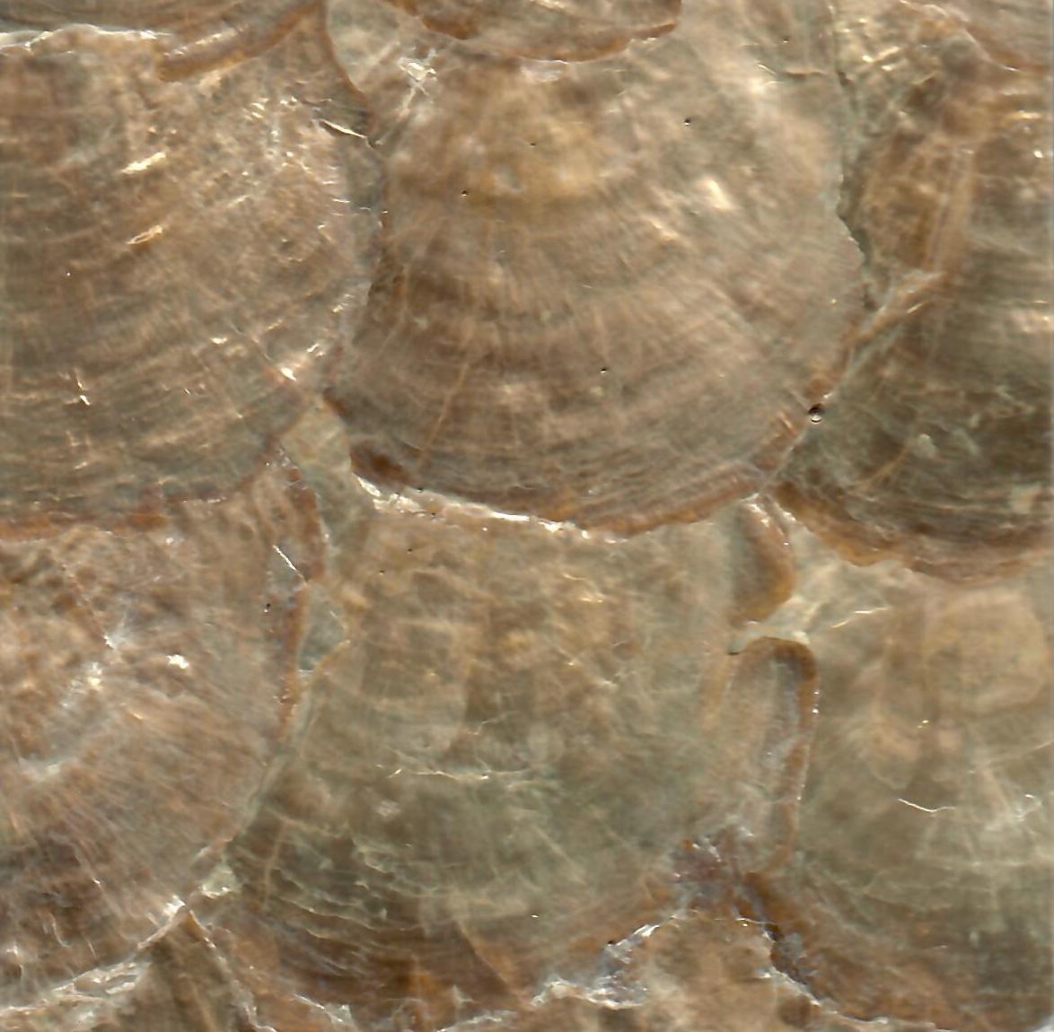 Golden Capiz Shell Mosaic Panel
