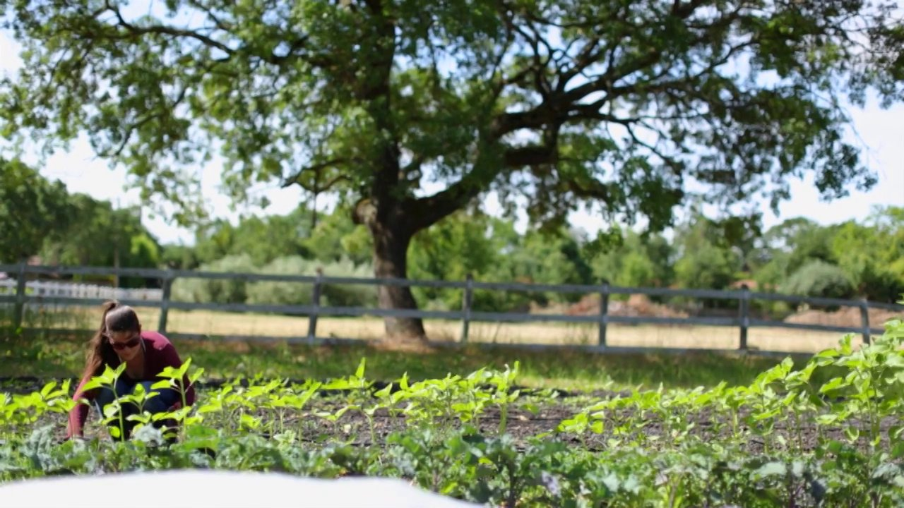 quarter-acre-farm-sonoma-ca.jpg