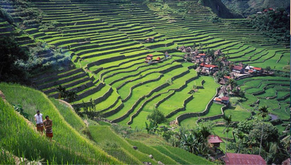 riceterrace.png
