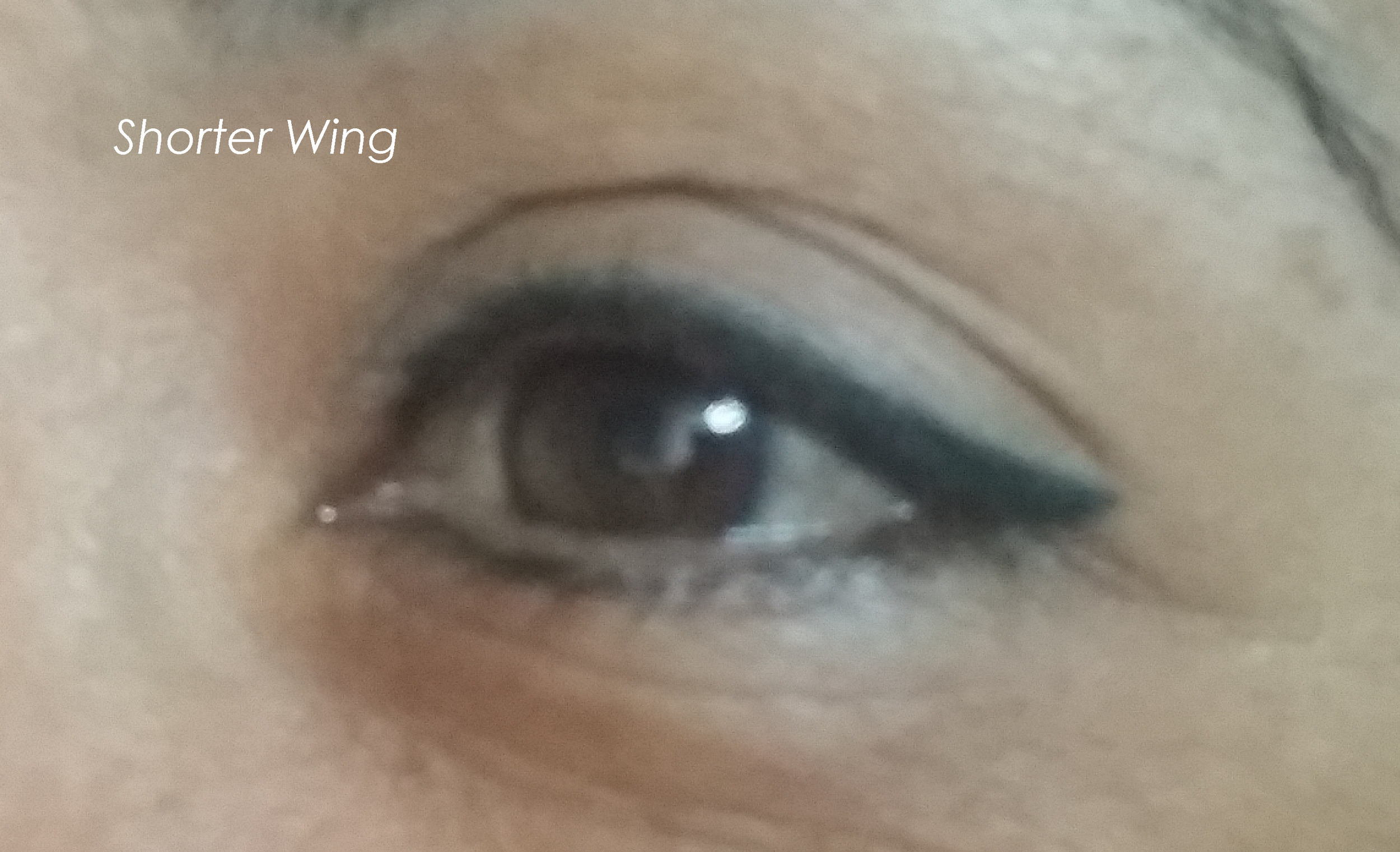 Shorter Wing.png