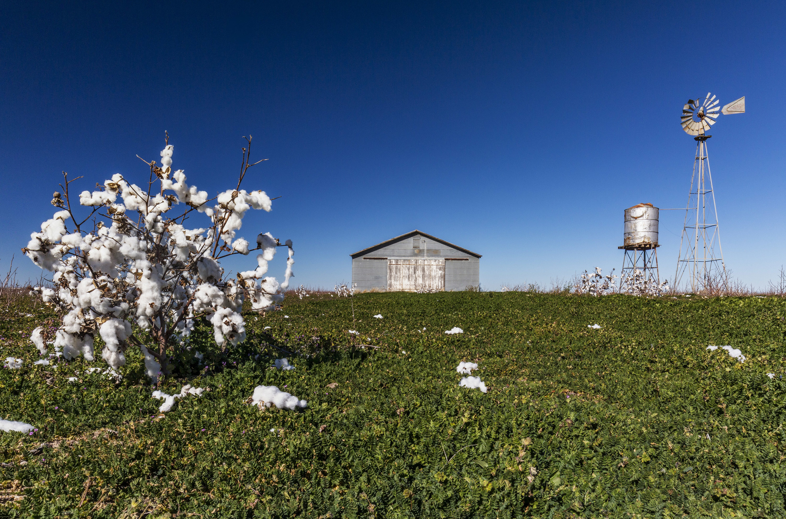 Windmill & Cotton 2.jpg
