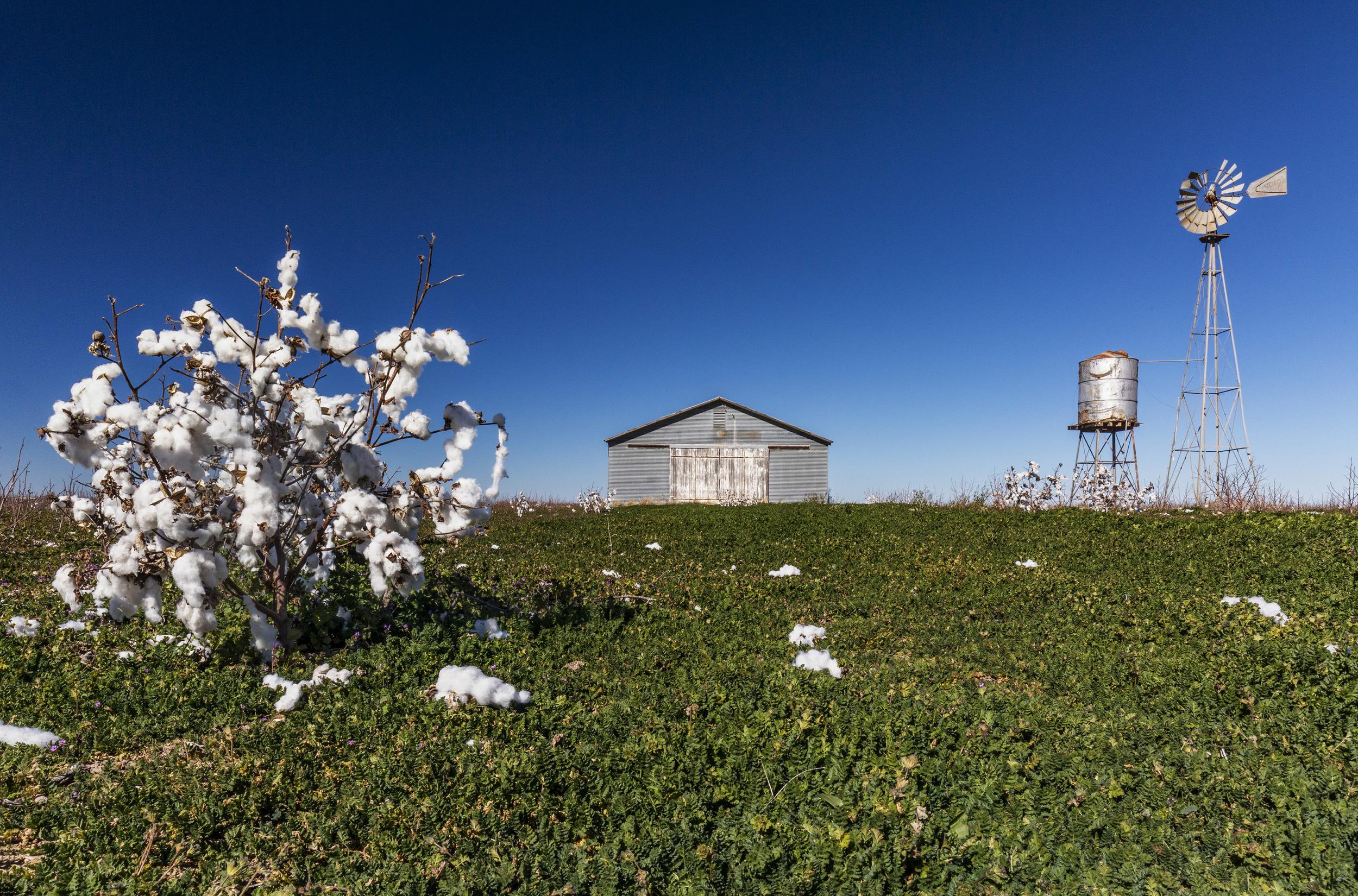 Windmill & Cotton 2.jpg