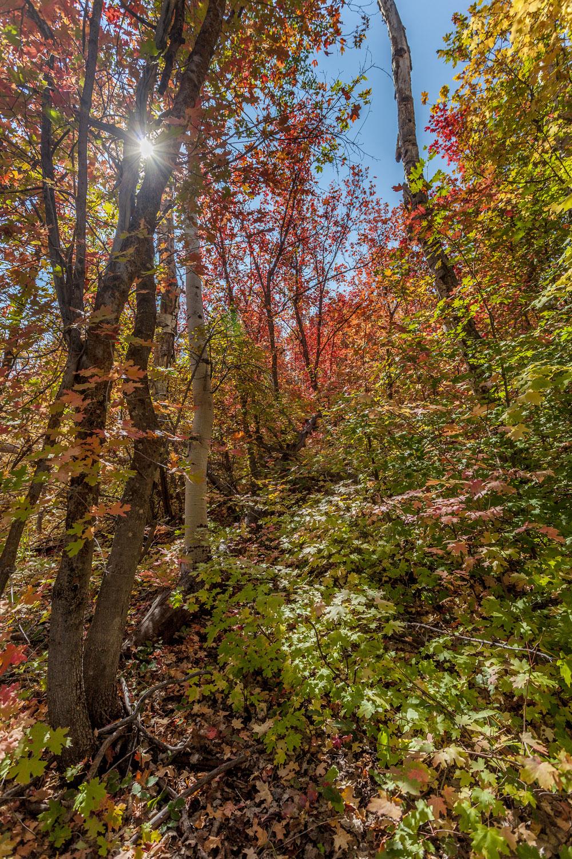 Fall Colors (14)-2.jpg
