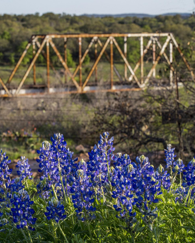 Bluebonnets and Bridge, near Llano. Texas 29 (7).jpg