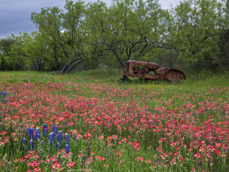 Tractor in Kingsland.jpg