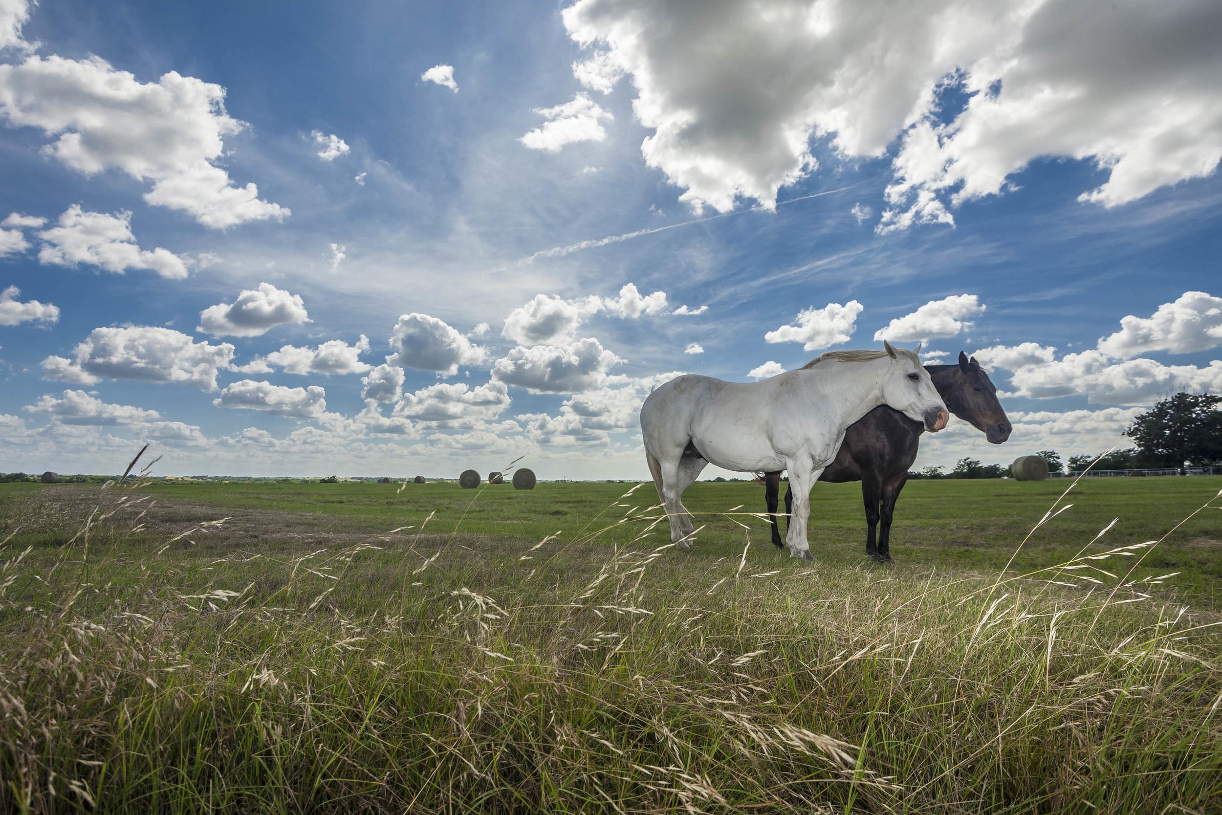 B&W Horses, Waxahatchie.jpg