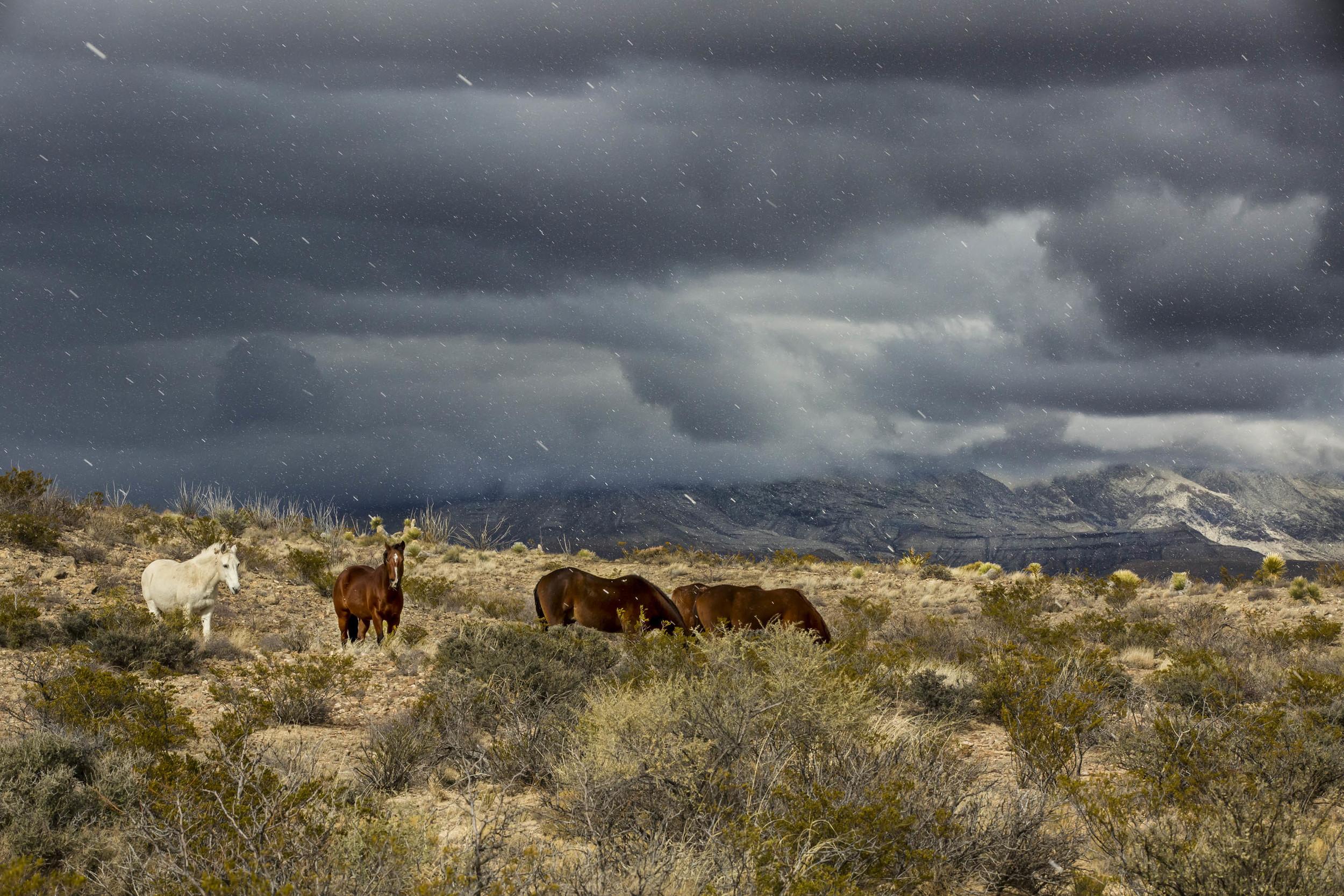 Horses near Guadalupe Mtns.jpg
