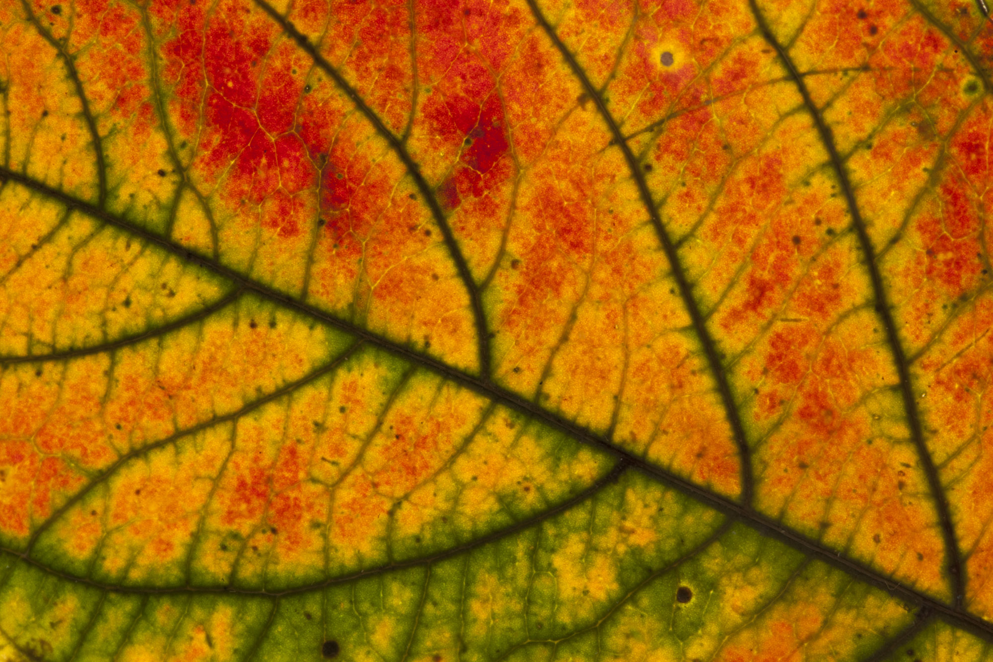 Leaf Details (1).jpg