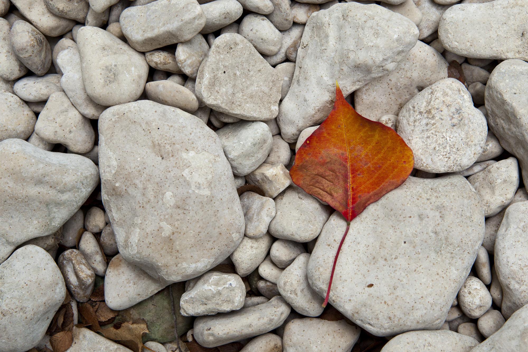 Red Leaf on stones in Green Belt.jpg