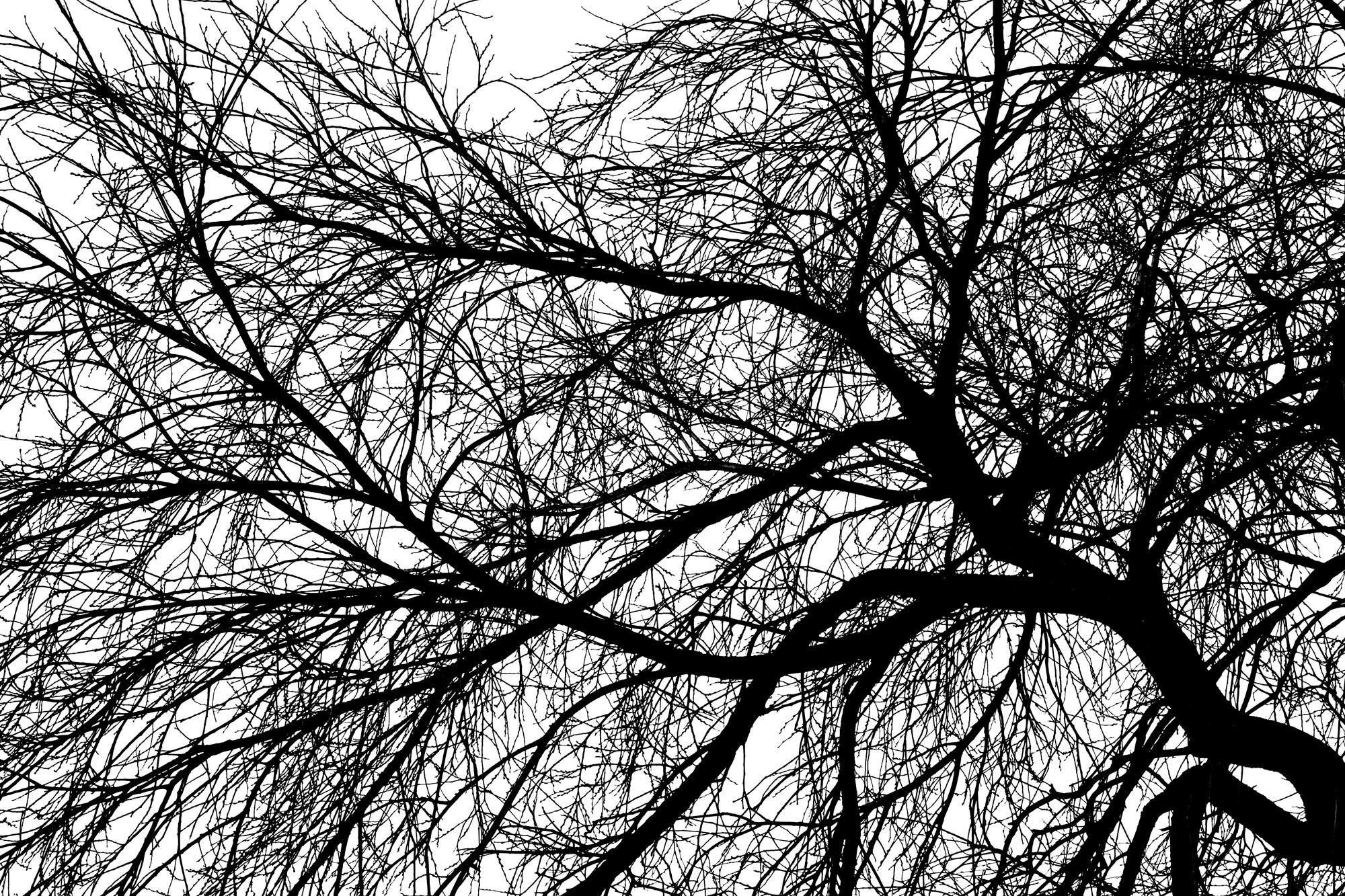 Trees best (7).jpg