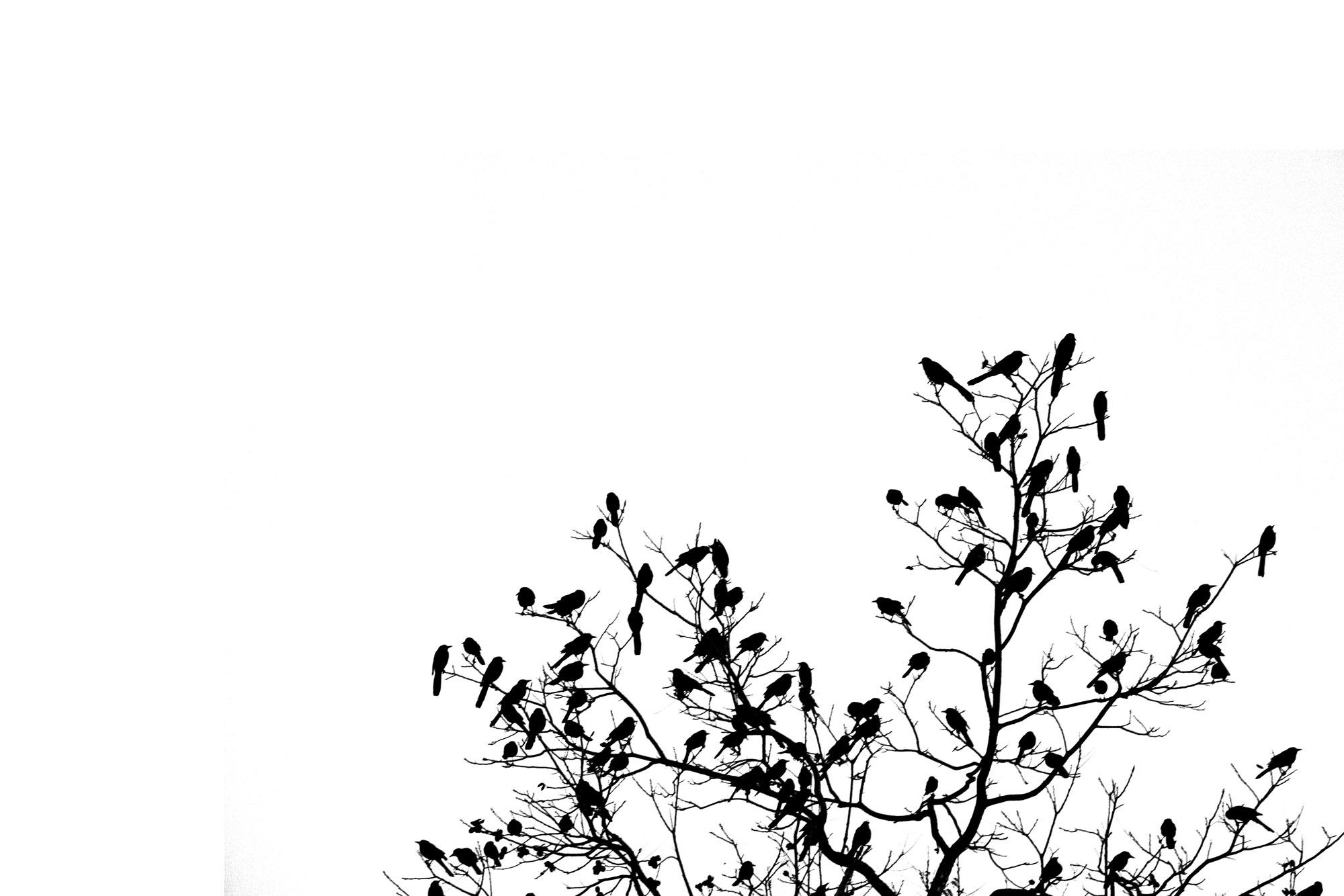 Trees Best (1) off center.jpg