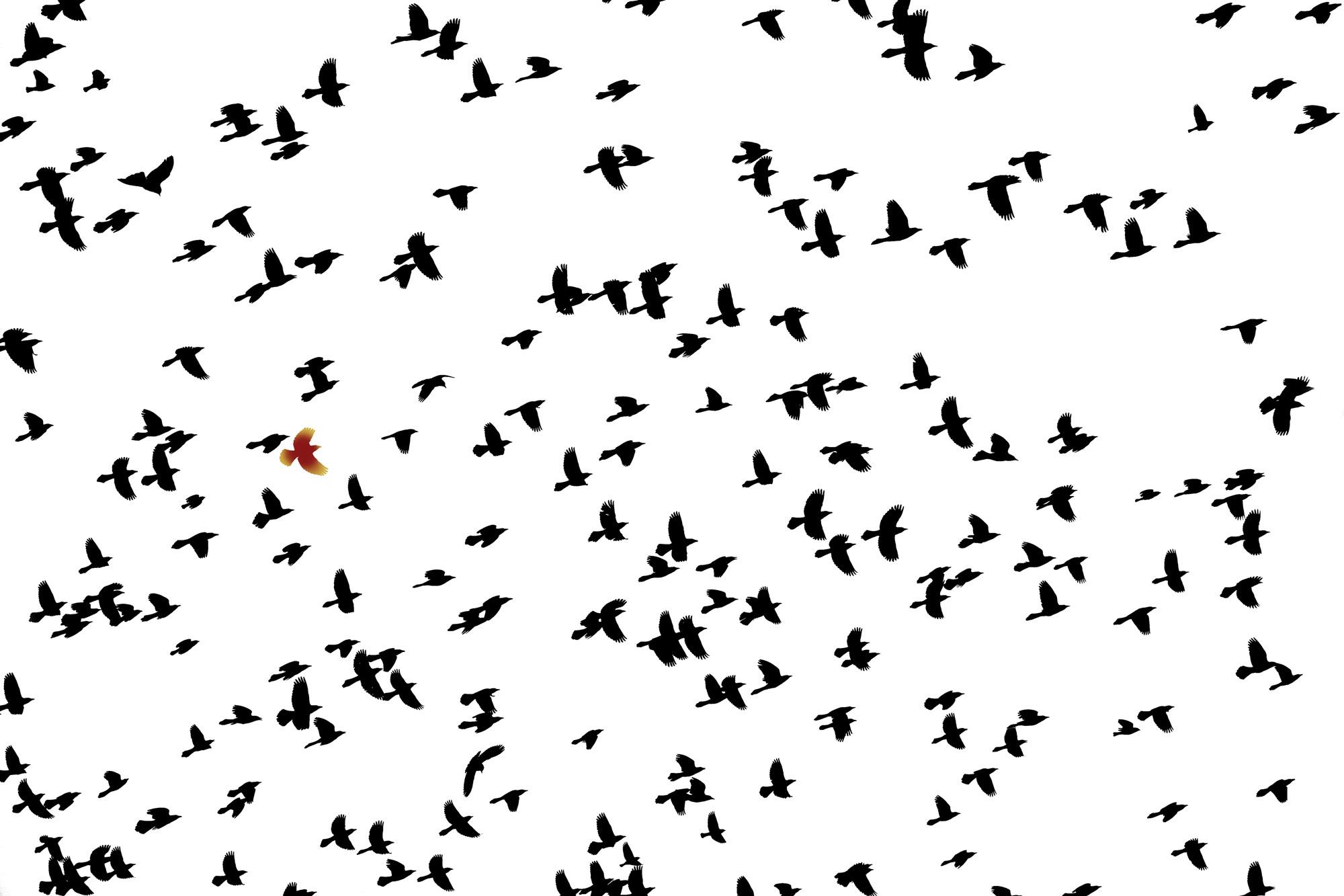 Flying Flock.jpg