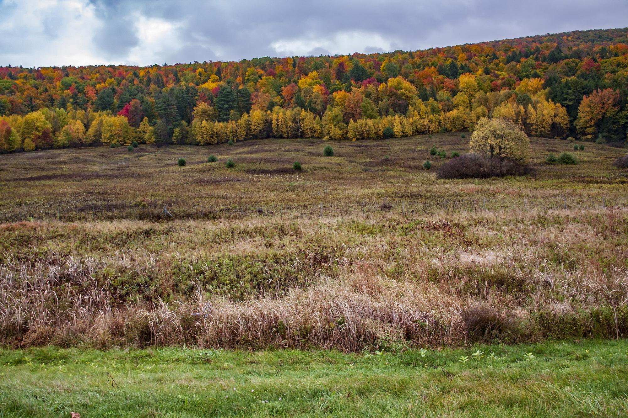 Adirondack Hill.jpg