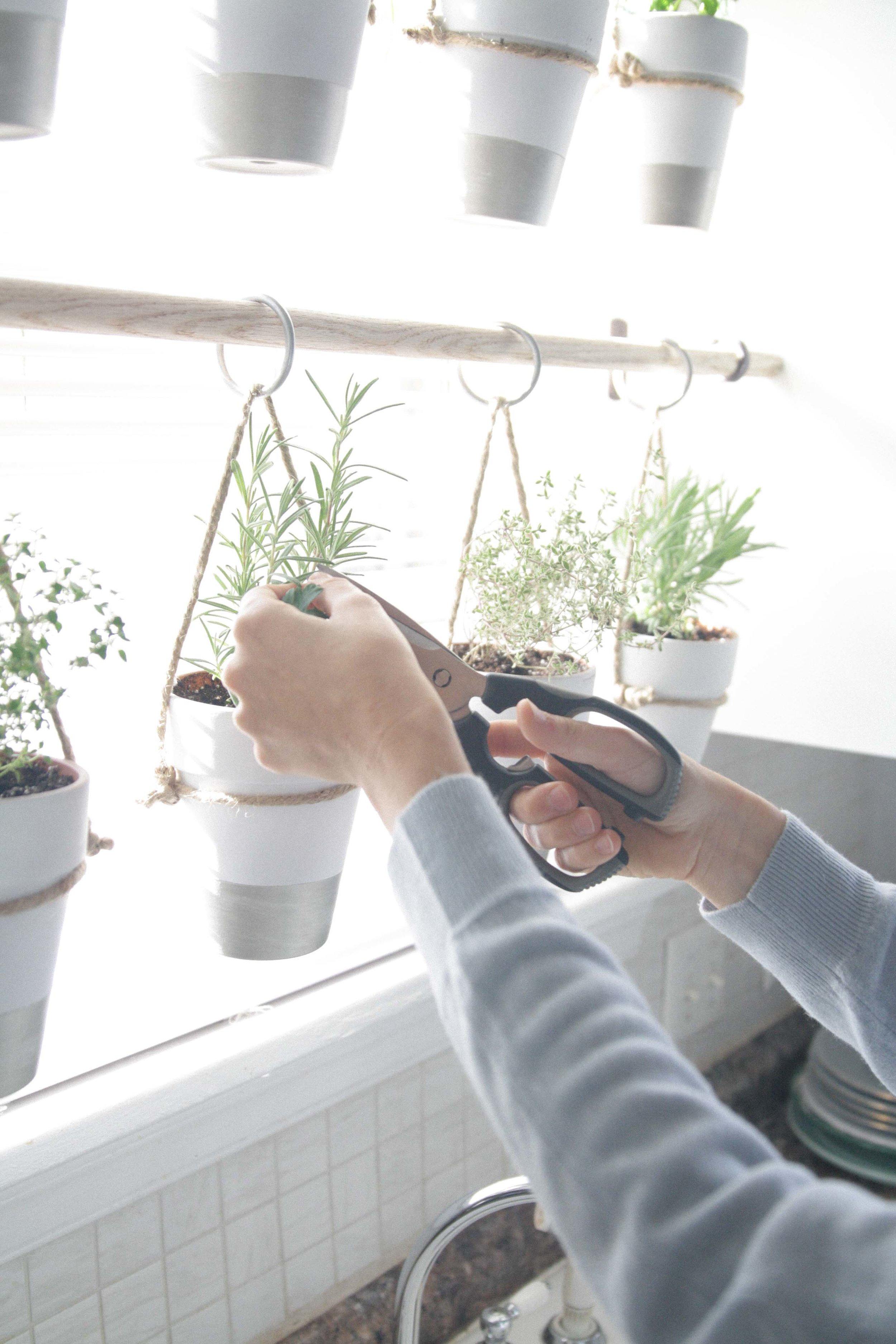 The Bird And Her Song Indoor Hanging Herb Garden
