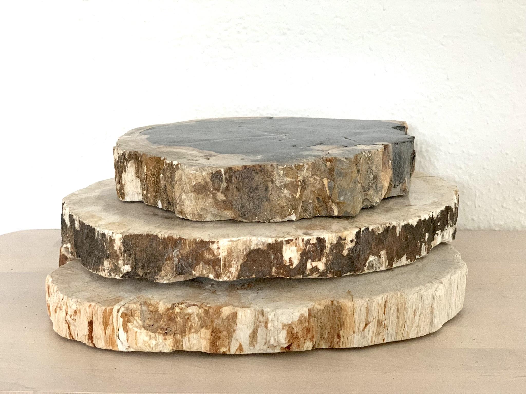 Petrified Wood Slabs $5 ea